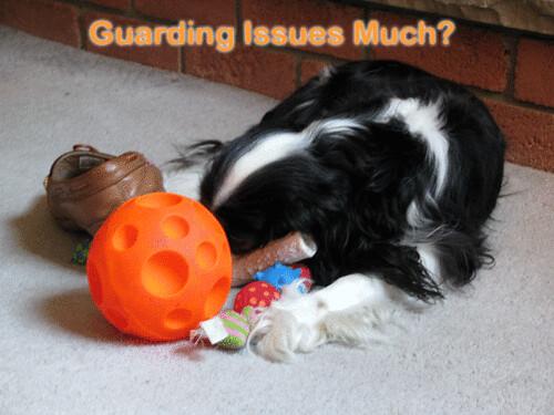 Kodee_guarding