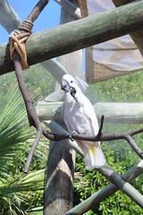 Parrot!!! (IsaCooper23) Tags: parrot loro papagayo cotorra