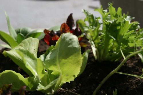 Permaculture in a pot