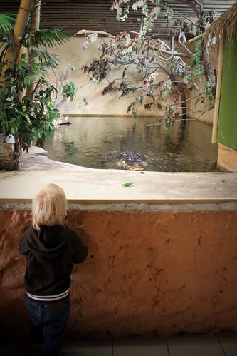 Gusten och alligatorn