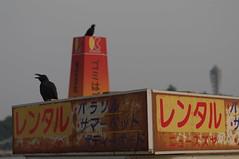 crow - 3
