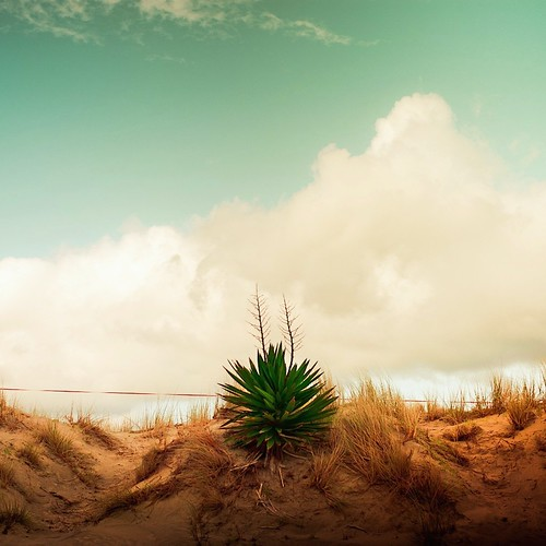 Beach Bush Clouds by ►CubaGallery
