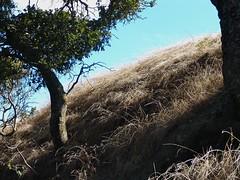Las Trampas Ridge (chet3) Tags: las tree grass creek oak san sanramon walnut danville walnutcreek ramon alamo oaktree trampas lastrampas