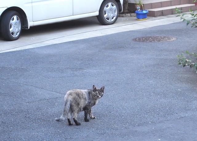 Today's Cat@2010-08-31