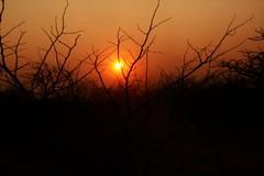 Ongava Etosha Sunset