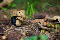 "Danbo collects ""nuts"" (generalstussner) Tags: forest canon nuts backpack adventures danbo revoltech 135f2l danboard 5dmarkii"