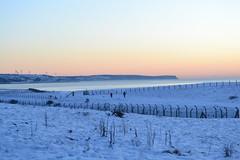 snowy solway coast cumbria (A_Buggy) Tags: snow west water coast snowy spaniel springer christmaseve cumbrian