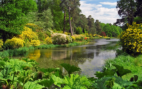 Leonardslee Gardens, West Sussex, UK | Lakeside view with flowering azaleas and Gunnera (12 of 23)