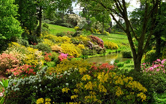Leonardslee Gardens, Lower Beeding, West Sussex, England | Walks through ancient woodlands filled with flowering azaleas (17 of 23)
