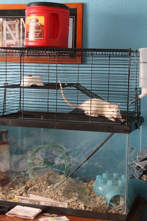 02-10-rat