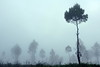 Hutaginjang -DSC_0242 (Johnny Siahaan) Tags: sunset mountains misty clouds sunrise indonesia gunung batak toba laketoba sumatera huta danautoba sumaterautara tobalake matahariterbit tapanuliutara hutaginjang taput johnnysiahaan mataharipagi fotodanautoba fotohutaginjang