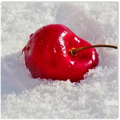 sans titre (Lara-queen) Tags: light red snow cold nature fruit rouge lumire vibrant vivid neige froid cerise bokehlicious abigfave colorphotoaward quynhvu laraqueen blinkagain rememberthatmomentlevel4 rememberthatmomentlevel1 rememberthatmomentlevel2 rememberthatmomentlevel3 rememberthatmomentlevel5 rememberthatmomentlevel6