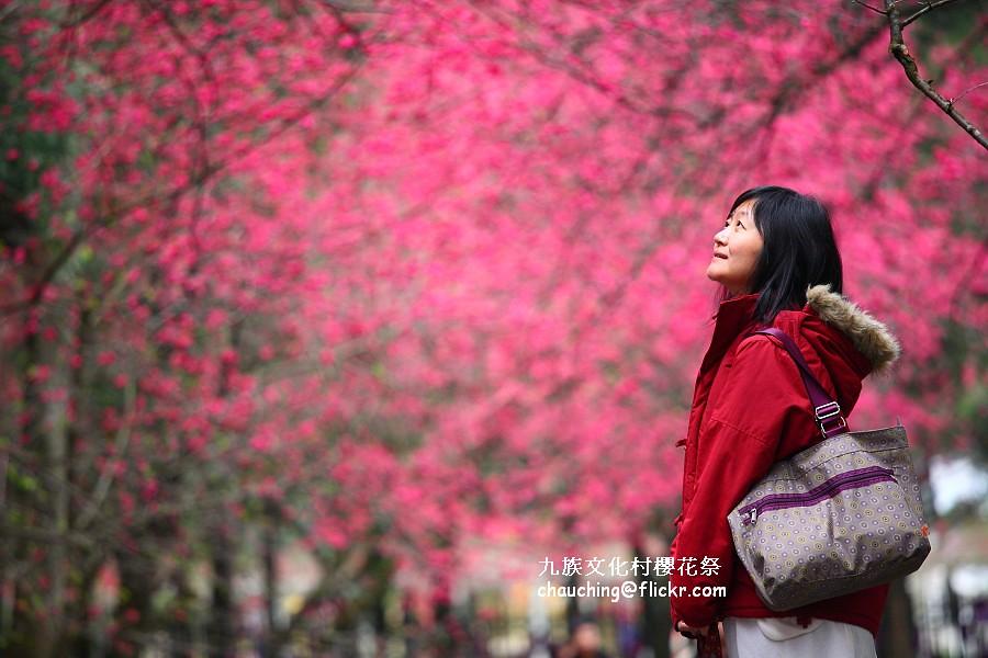 九族櫻花祭900x600_IMG_1421