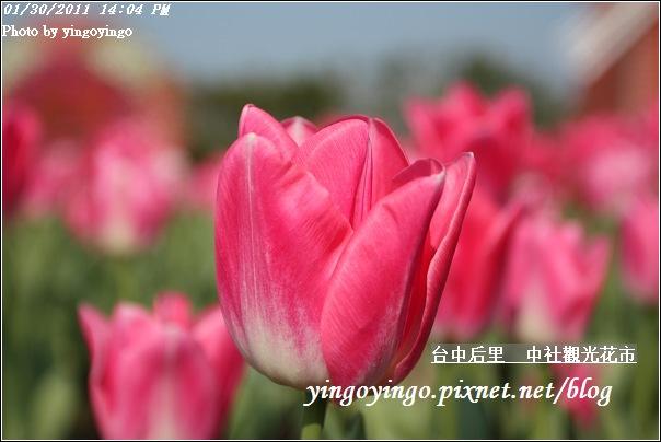 台中后里_中社光觀花市20110130_I6171