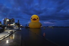 Toronto Duck (Marcanadian) Tags: toronto ontario canada day 150 july 2017 summer redpath festival waterfront lake giant rubber duck inflatable celebration downtown city harbour harbourfront hto park