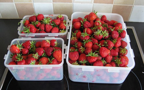 Allotment strawberries