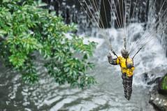 Landing (daniel.lih.photography) Tags: sculpture water museum army waterfall nikon war dof bokeh taiwan figure taipei 台灣 台北 parachute 美術館 d90 朱銘 jumingmuseum armedforce daniellih