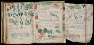 Voynich Manuscript Page177.jpg