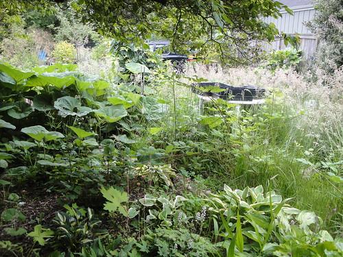 Weedy Shade Garden