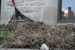 MU workers rake glass, not leaves