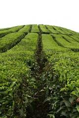 kebun teh, sidamanik, permatang siantar (remiglobal) Tags: church indonesia tea mobil teh teaplantation medan batak kebunteh luarbiasa sidamanik permatangsiantar