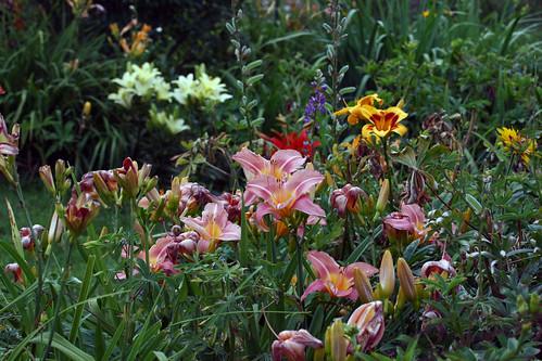 flower garden 132