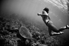 Burnin' Ocean (Micah Camara) Tags: ocean sea playing girl swimming hawaii underwater turtle kauai friendly honu playful