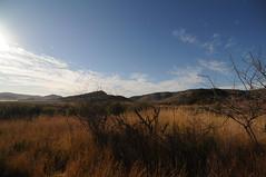 DSC_7607 (kcadpchair) Tags: elephant southafrica jackal safari leopard rhino zebra crocodile giraffe impala gnu grayheron springbok fisheagle guineafowl suncity gamereserve waterbuck whiterhino pilanesberg gemsbok whitebreastedcormorant crimsonbreastedshrike
