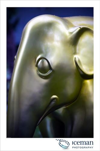 251-Oscar
