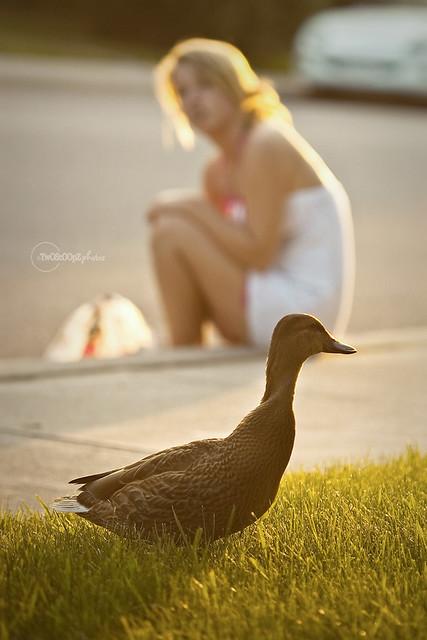 quack! day 187 (18)