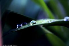 ([L] di .zuma) Tags: pearl jam sublime mestre venezia pioggia diluvio meraviglia favolosi