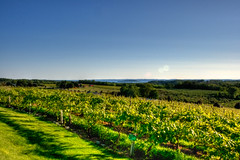 Vineyards and the Bay