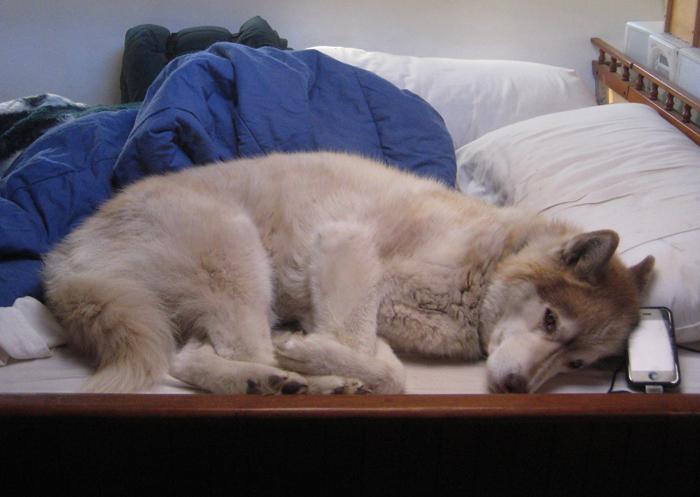 Bain in Bed