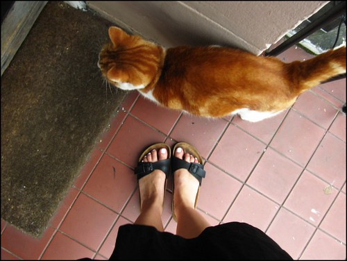 feet and cat