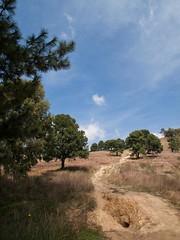 Imagen 16 (cguevara_aguilar) Tags: cielo árbol nube ‡rbol rbol cerrozapotecas