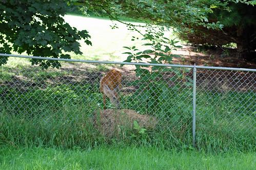 71010 Deer 02