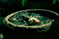DSC_0026 (~Virginia Vast~) Tags: shells macro lomo soil dirt seashell