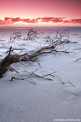 Twilight Fear (Chad Solomon) Tags: ocean new wood longexposure morning pink red sky orange seascape tree art wales clouds sunrise canon landscape dawn coast twilight sand pacific chad south low roots peach australia pacificocean nsw newsouthwales 5d mystical canon5d colourful sands canonef1740mmf4lusm solomon tweed 2010 lowangle iso50 fingalhead fingalheads texutre singhray chadsolomon tweetcoast