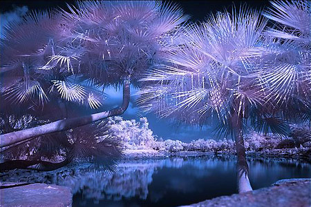 05_infrared_photography_4