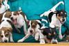 Hunde - 48 (Manfred Lentz) Tags: pets puppies pubs hunde welpen hündchen babydogs whelps dogslittledogs