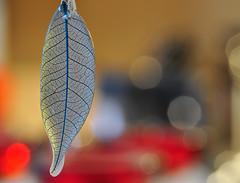 Blue Leaf & Big Bokeh! (Witty nickname) Tags: blue macro calgary closeup leaf dof bokeh alberta jewelery tamron 90mm tamron90mmf28 blueleaf sooc bokehlicious nikond90 hexagonalbokeh herowinner blueleafbigbokeh