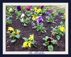 Flores de Curitiba para nossa sexta ser mais colorida! (Iris Florarte) Tags: flores curitiba praça frio rodas