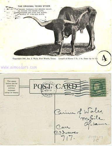 POSTCARD: The Original Texas Steer