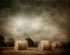 after the mowing (BooBooetmoi) Tags: texture hay hayrolls dreamcatcher flypapers selectbestexcellence sbfmasterpiece summerpainterly