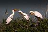 20090902 Okavango - Moremi 181 (blogmulo) Tags: africa birds fauna canon wildlife reserve delta aves safari botswana moremi f28 okavango canon70200 canon450d blogmulo 200908