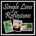 Single Lens Reflexions