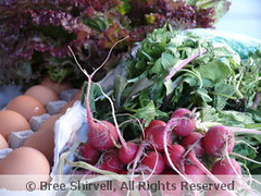 "A weekly CSA half share from Stone Gardens Farm in Connecticut • <a style=""font-size:0.8em;"" href=""http://www.flickr.com/photos/52093939@N07/4812453867/"" target=""_blank"">View on Flickr</a>"