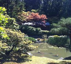 Turtle at Seattle Japanese Garden