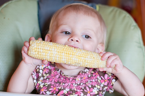 Sweet Corn 2010