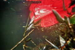 (Mr Pokeylope) Tags: analog kayak eifel kanu kajak rur paddeln dmunterwasserkamera